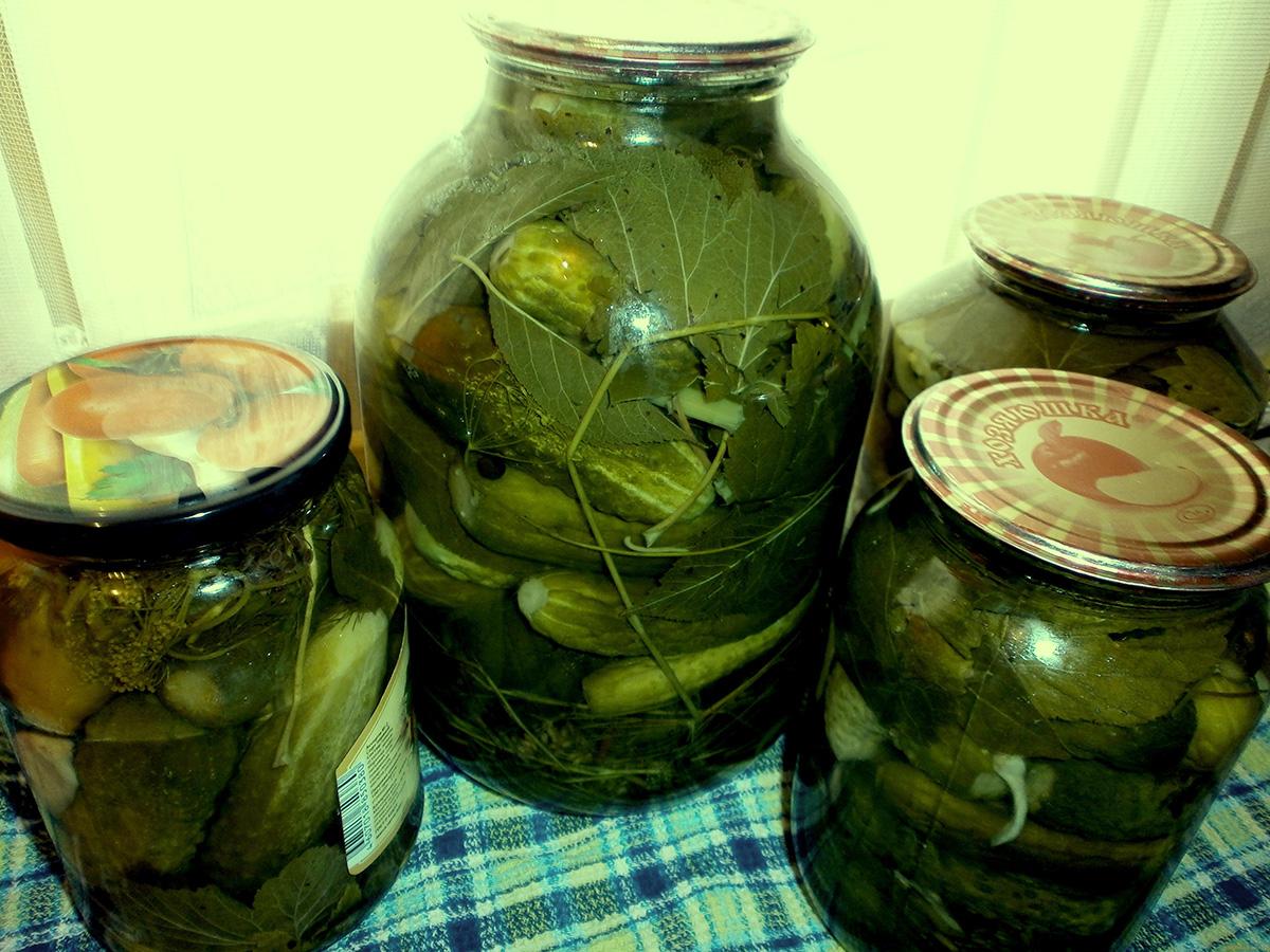 Соленые огурцы не на зиму рецепт пошагово