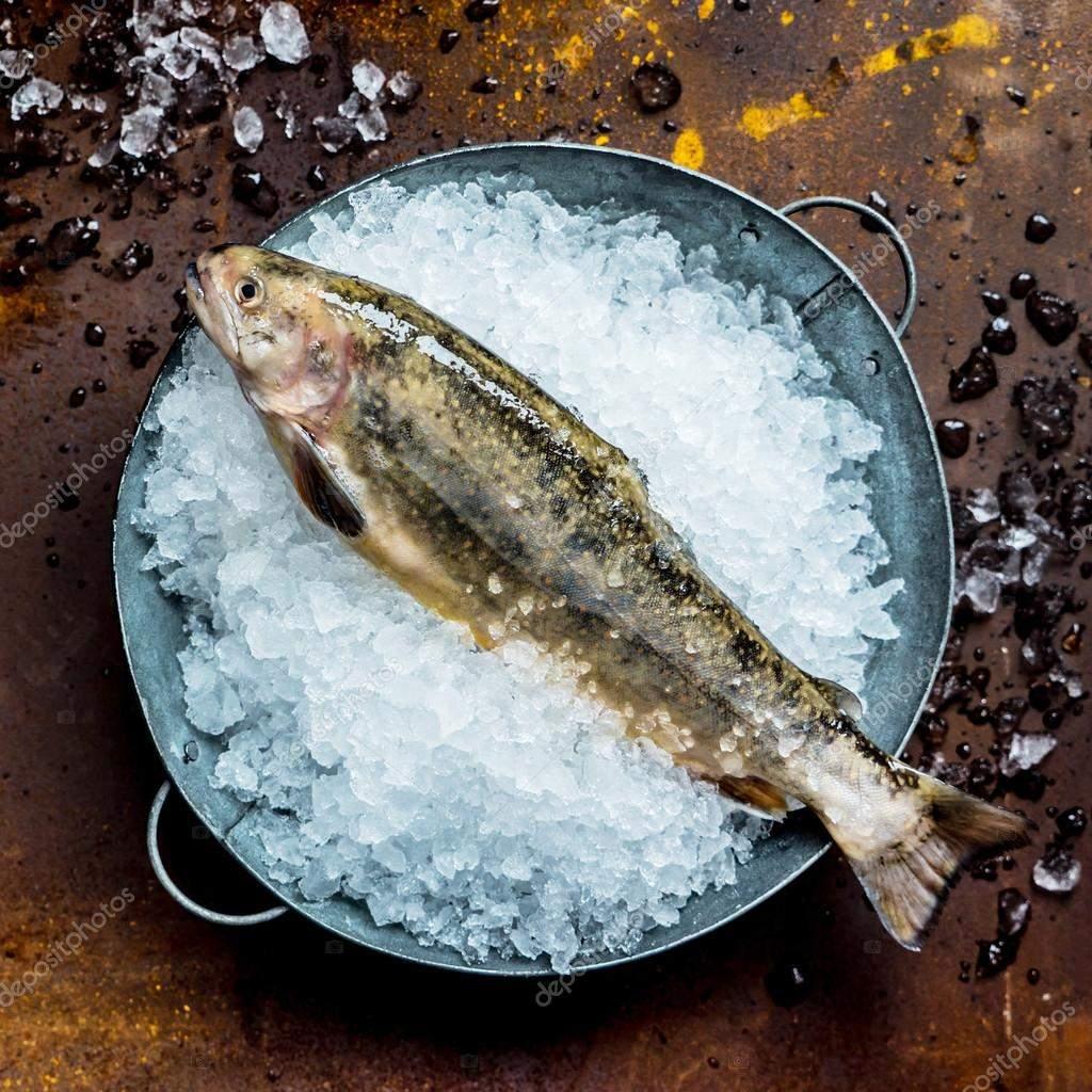 Выложите рыбу на лед