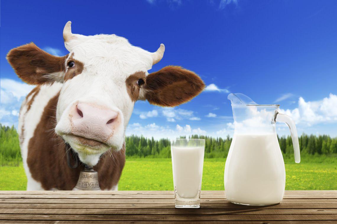 Специи для горячего молока