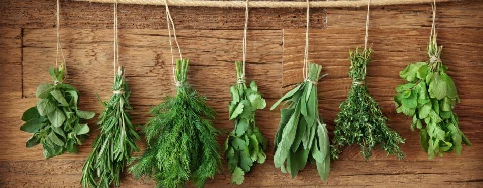 Использовать травы в блюдах